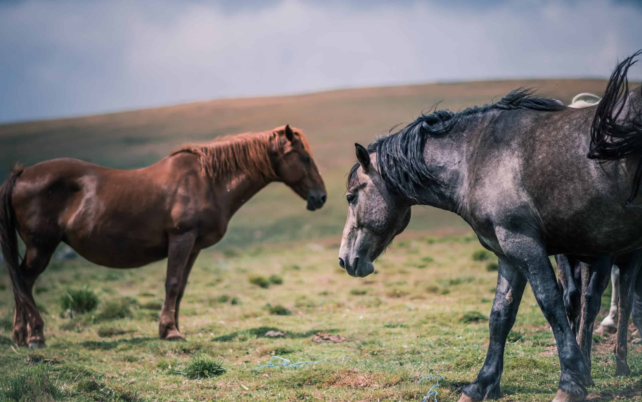 Wild Horses: Tame And Befriend Them