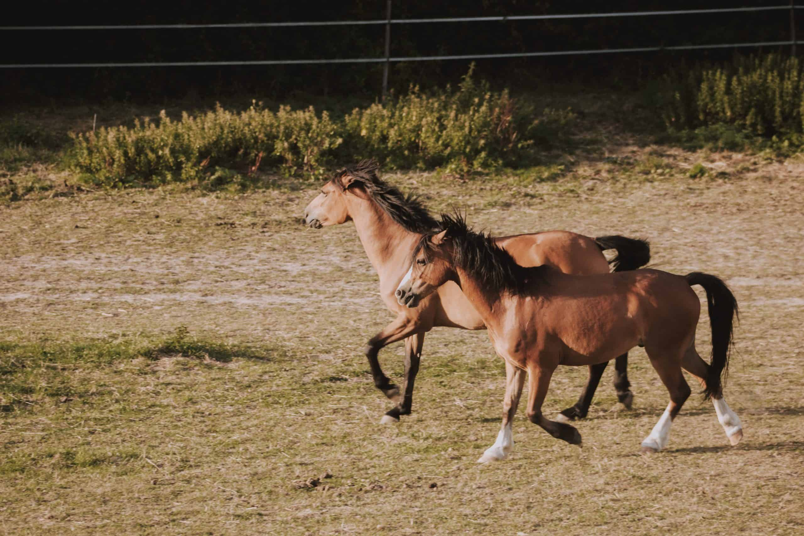 How To Train Foals: Know The Basics
