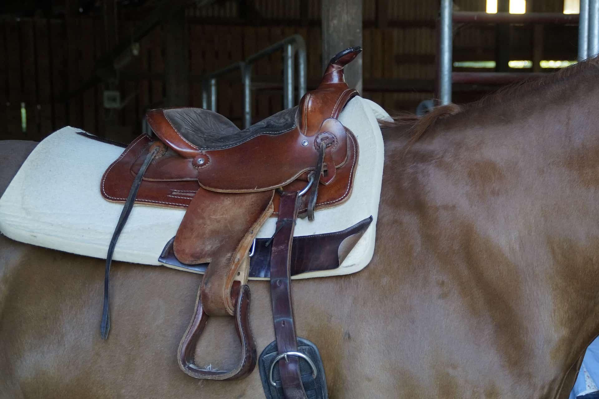 Basic Horse Riding Equipment For Beginners