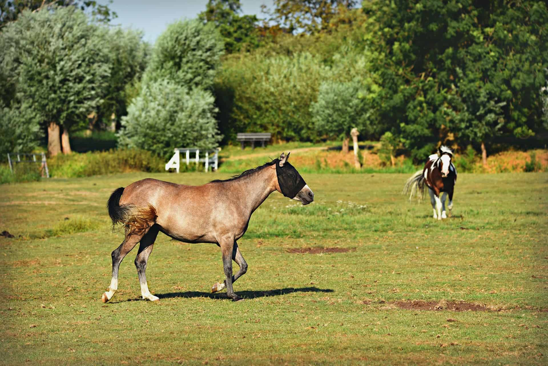 Anti-Fly Mask for Horses Can Protect Your Horse From Diseases