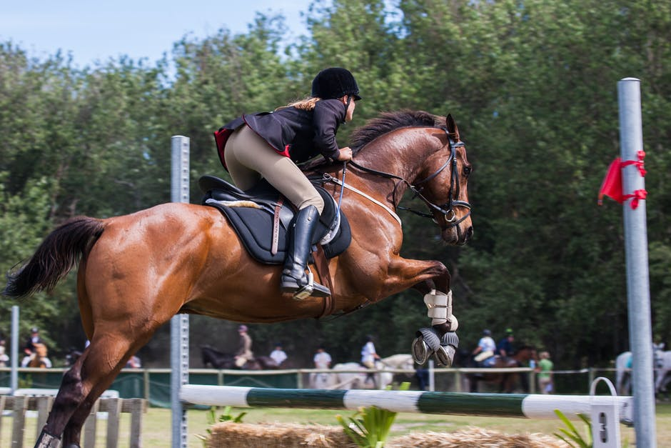 horse riding basics