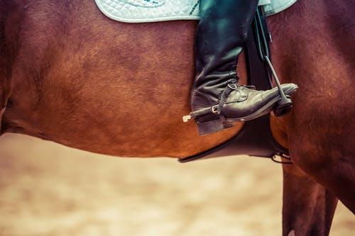 A close up of a horse